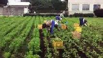 高級ジュースにんじんジュース|ジョブチューン通販ギフト贈答品贈り物内祝プレゼント特別な記念日。潮田農園httpwww.carrot-story.com