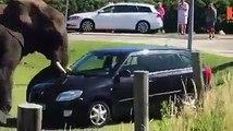 Elephant damaged car and moter cicals