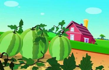 Watermelon Grow