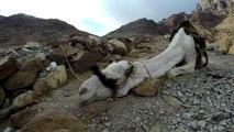 Climb Hiking Mount Sinai - Sharm El Sheikh 2015 - Egypt - Subida Monte Sinai - 1080p 30fps