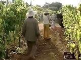 02. Γλυκόξινο κρασί E02