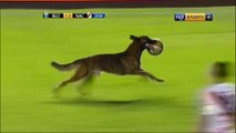 شاهد: لاعبون يطاردون كلب اقتحم مبارة لكرة القدم