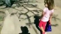 Cette petite fille ne s'attendait pas à faire une balade avec lui !