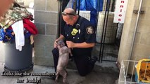 Puppy Is Sad At Shelter_ Until She Reunites With The Firefighter Who Saved Her F
