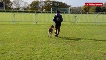 Moëlan-sur-mer (29). Des chiens champions en obéissance