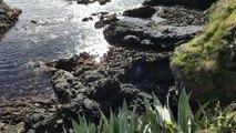 Caloura - ilha de São Miguel, arquipélago dos Açores - Azoren