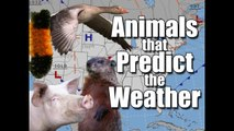 Animals that Predict the Weather