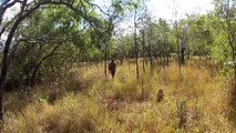 Pig Hunt new June Gulf Country Australia Wild Boars EP.21