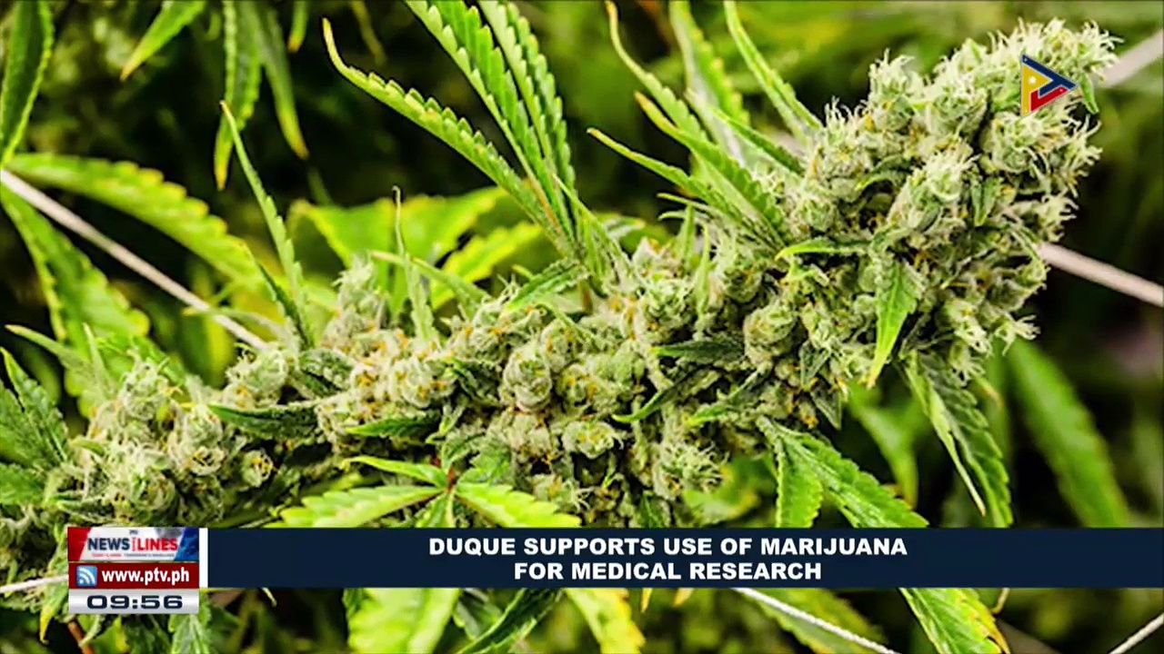 Duque supports use of marijuana for medical research