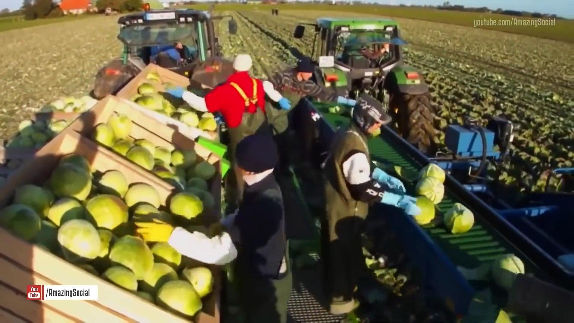 Modern agricultural harvesting machine - Harvesting potatoes, sugar beets