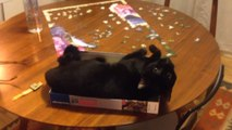 Funny Cats and Boxes Videos