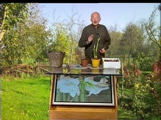 Visionnez les Cours Vidéo de Amaryllis - Conseils de Jardinage