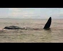 Whale Oak Island Beach Oak Island NC