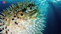 Learn Sea Animals, Learn Farm animals, Learn Wild Animals   Animal Learn Compilation for Kids