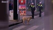 Sokak köpeğinden Ata'ya saygı duruşu