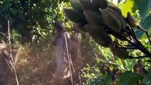 National Geographic Documentary - Secrets In the Amazon RainForest - Wildlife Animal