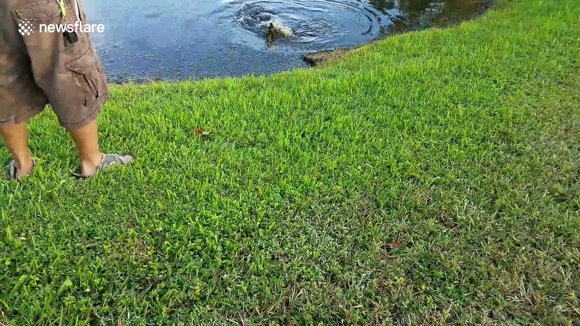 Fisherman accidentally catches an angry baby alligator