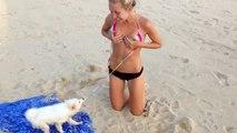 This dog hates swim suit   Bikinii VS cute puppy