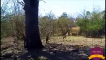 10Top 10 Craziest Moments of Leopard vs Animals  Amazing leopard fights in the role of a hero