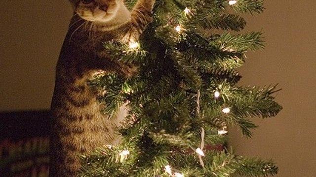 Christmas Tree Fail Compilation. Christmas trees falling on people