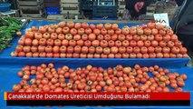 Çanakkale'de Domates Üreticisi Umduğunu Bulamadı