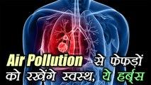 Air pollution से फेफड़ों को रखेंगे स्वस्थ, ये हर्ब्स | Herbs keep lungs healthy with air pollution