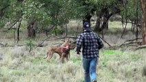 Un homme frappe un kangourou pour défendre son chien