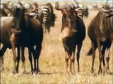Intelligent Animals: HYENAS Eating, Mating, Laughing [Full Nature/Wildlife Documentary]