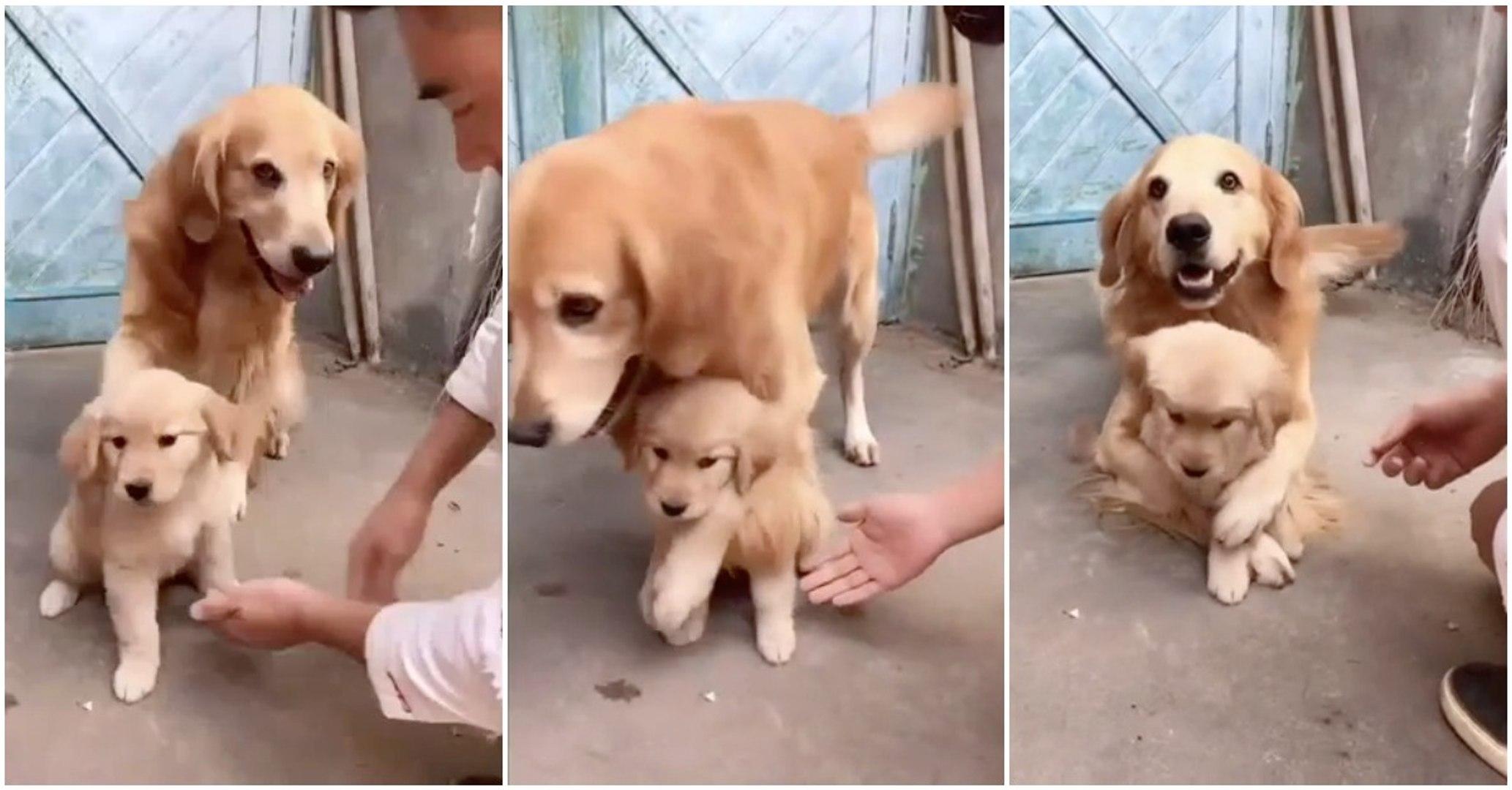 Uma cadela extremamente protetora para com o seu bebé... SO CUTE!
