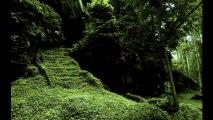 Renegade Daleks in Jungle