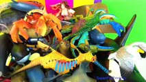 Köpek Balıkları Balıkları hakkında bilgi edinin Deniz Hayvanları - Çocuk Oyuncakları - İngilizce