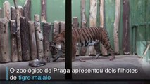 Os dois novos moradores do zoo de Praga