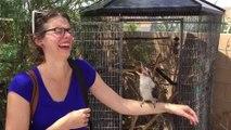 Une femme se tape un fou rire avec un Martin-pêcheur