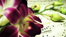Romantic Piano Music: Sweet Music Solo Piano, Music for Lovers and Piano Bar