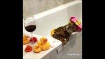 Ce chaton qui se relaxe dans son bain est la vidéo la plus mignonne que vous verrez aujourd'hui