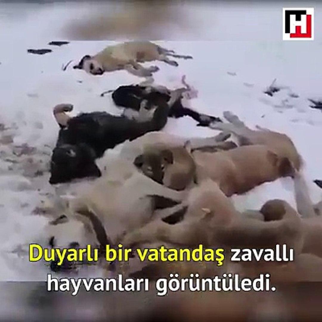 KOPEKLERi ZEHiRLEYEREK TELEF ETTiLER