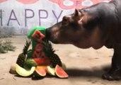 Cincinnati Zoo's Fiona the Hippo Celebrates First Birthday