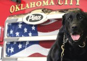 Oklahoma Firefighters Save Former Rescue Dog Trapped Under Decking