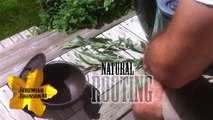 Natural Organic Rooting Hormone- Propagate Plant Cuttings Mix