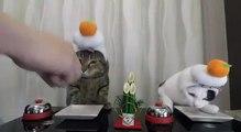 Ces chats sonnent la sonnette pour manger... tellement drole !