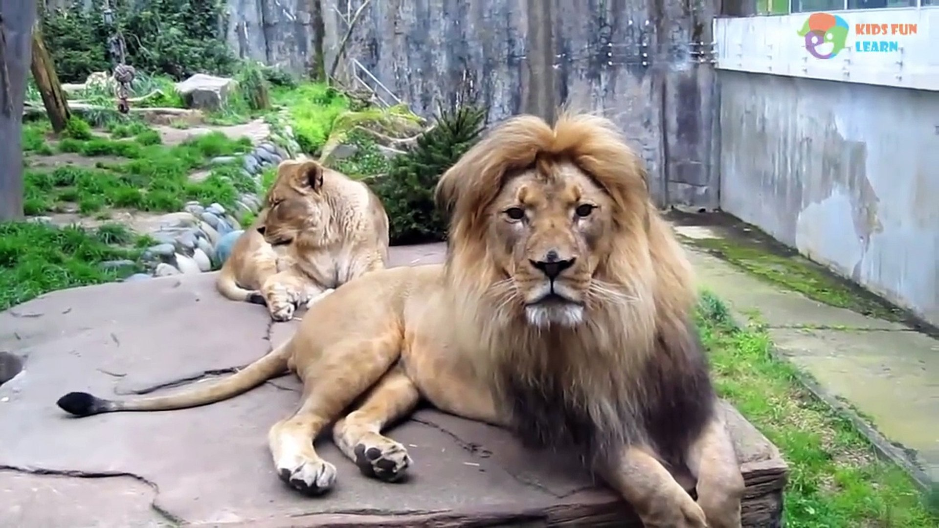 Kids and wild animals At The Zoo: Rainforest Animals and African animals - Animals learn for kids