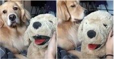 Mulher arranja forma de determinar se o seu cão é ou não ciumento... e a resposta não tardou!