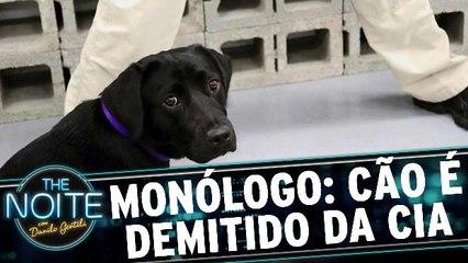Monólogo: Cachorrinha é demitida da CIA