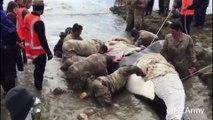 VIDÉO - Des militaires sauvent un orque échoué en Nouvelle-Zélande