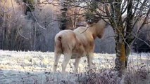 Rare White Moose, Spared From Death, Spotted Feeding in Swedish Forest