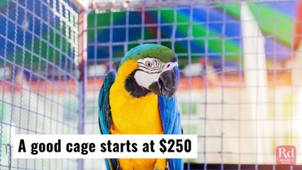 How to Take Care of Your Macaw