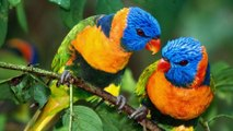 The beautiful pair of birds - Family of birds. They are very beautiful !
