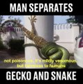 Cet homme aide un lézard piégé par un serpent