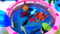Learning Sea Animals Names Teach Babies, Toddlers, Children, Kids learn Sea Animal Toy Compilation