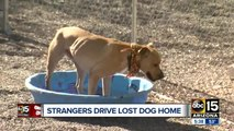 Strangers giving lost dog a ride home to Nebraska